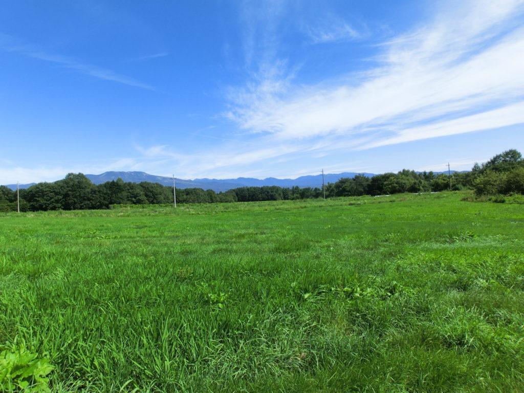 広大な浅間高原の緑