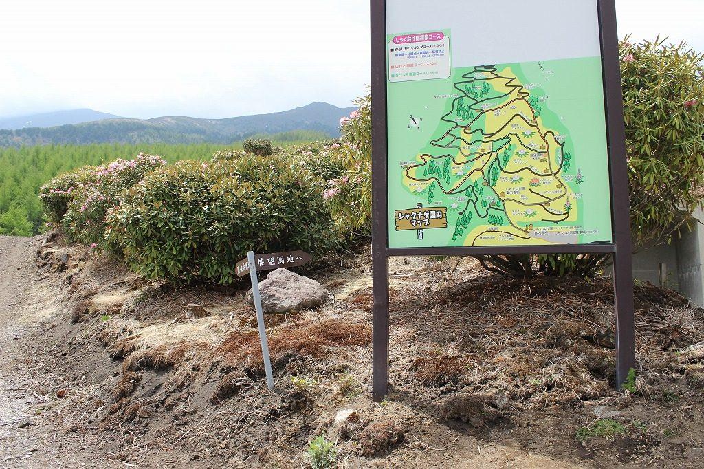浅間高原のシャクナゲ園の園内マップ