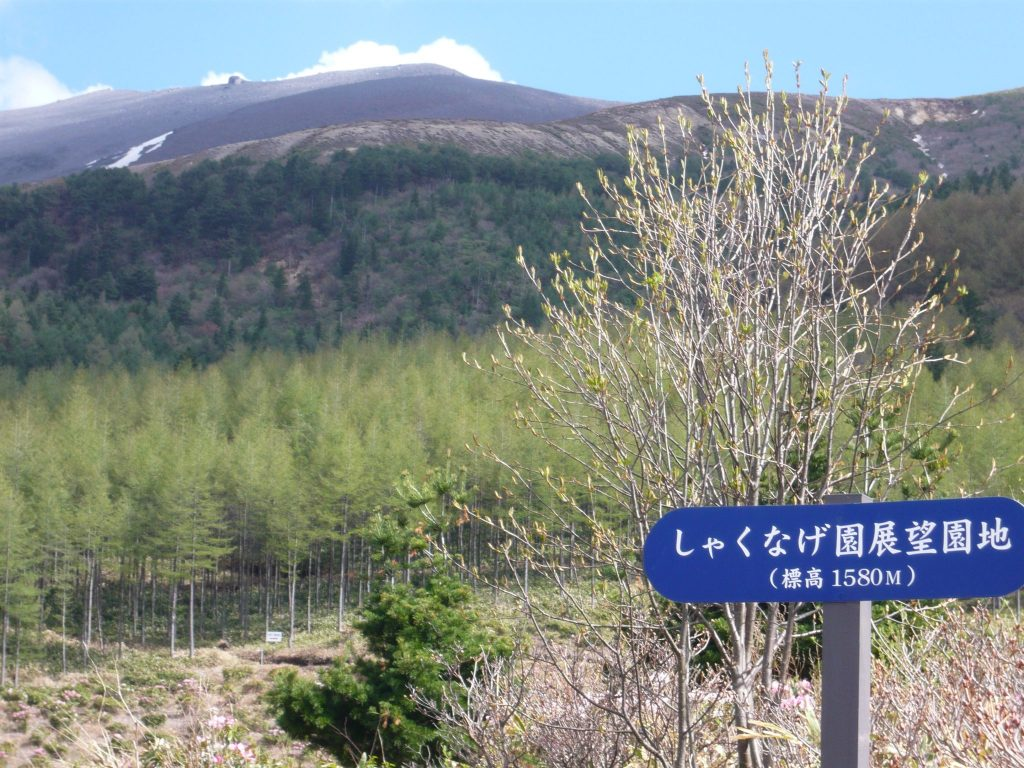 嬬恋村浅間高原シャクナゲ園