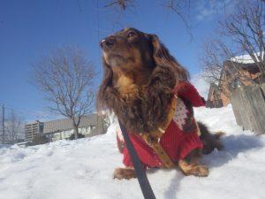 雪上ドッグランのあるゲレンデ