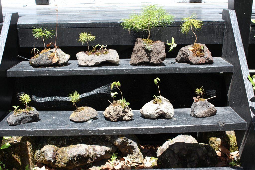 ルネス軽井沢のフロント事務所の階段に並べた植木