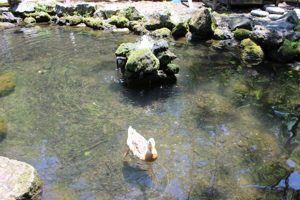 軽井沢おもちゃ王国のアスレチックエリア「鴨池」