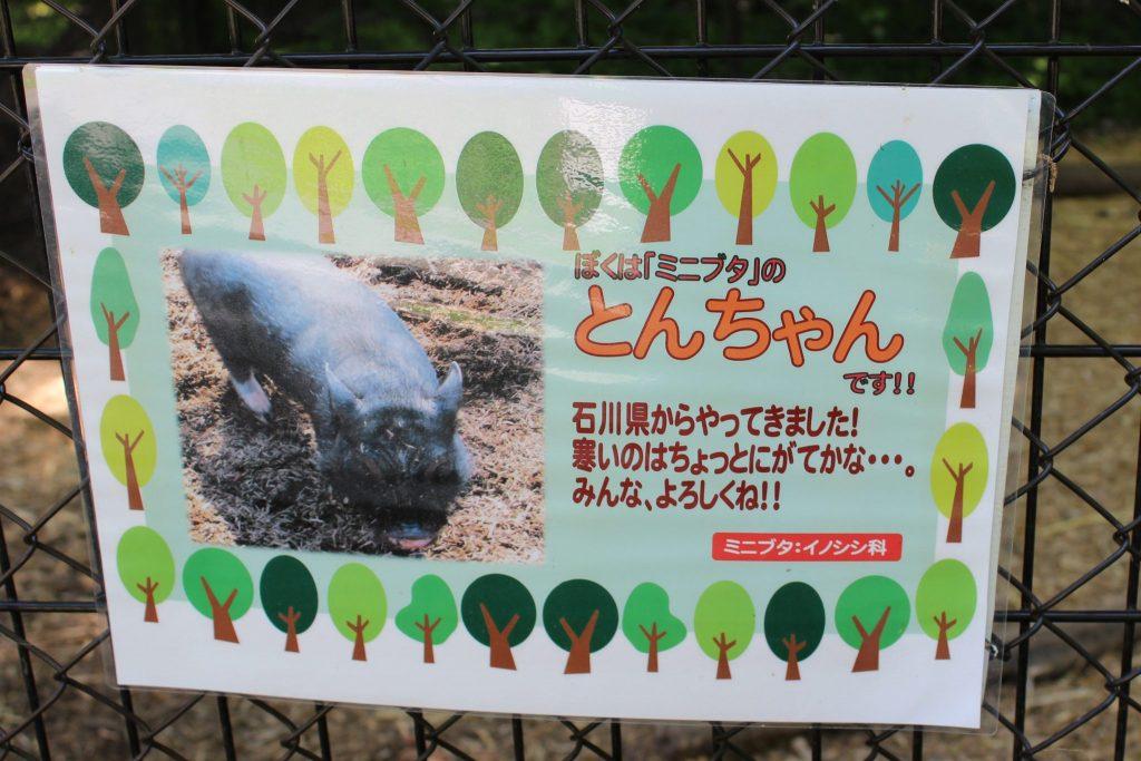 軽井沢おもちゃ王国のアスレチックエリア「どうぶつ広場」黒豚