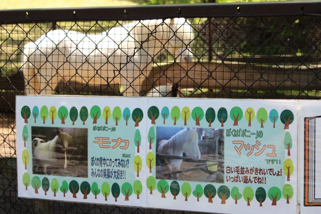 軽井沢おもちゃ王国のアスレチックエリア「どうぶつ広場」ポニー