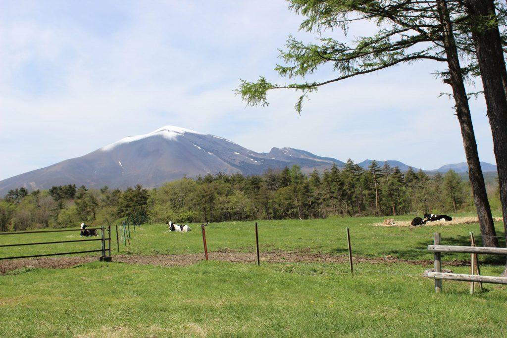 浅間牧場の見晴らしまきばにおける放牧風景