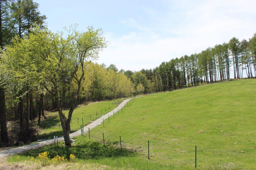 浅間牧場の遊歩道