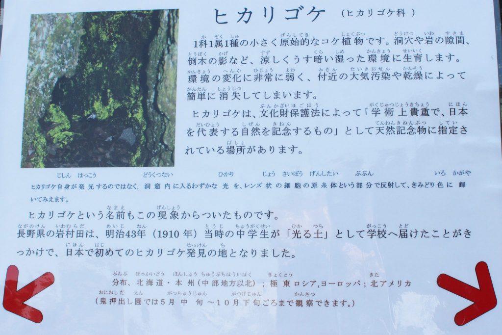 鬼押し出し園 浅間山観音堂 ヒカリゴケ