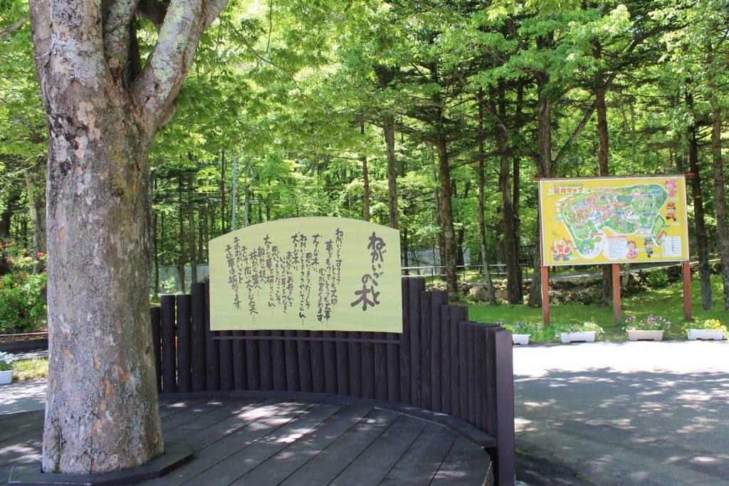 軽井沢おもちゃ王国のねがいごとの木